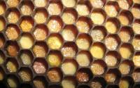 лечение пчелиной пергой