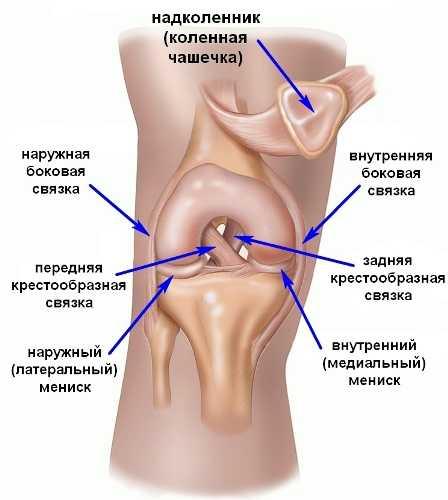 Мазь против воспаления коленного сустава болезнь коленного сустава