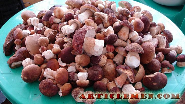 польза белых грибов