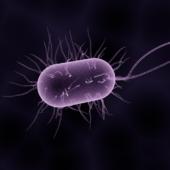 Болезнетворные бактерии: виды, где обитают, какие могут вызвать заболевания, меры борьбы