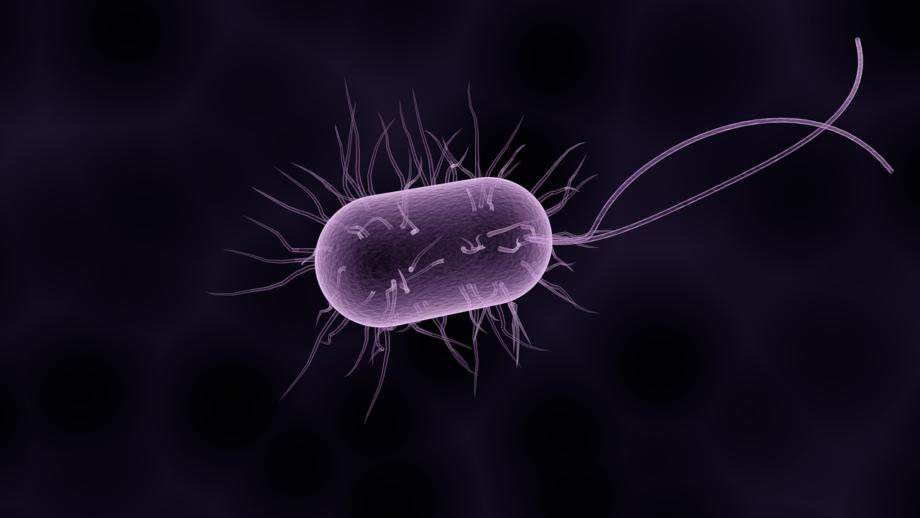 боболезнетворные бактерии